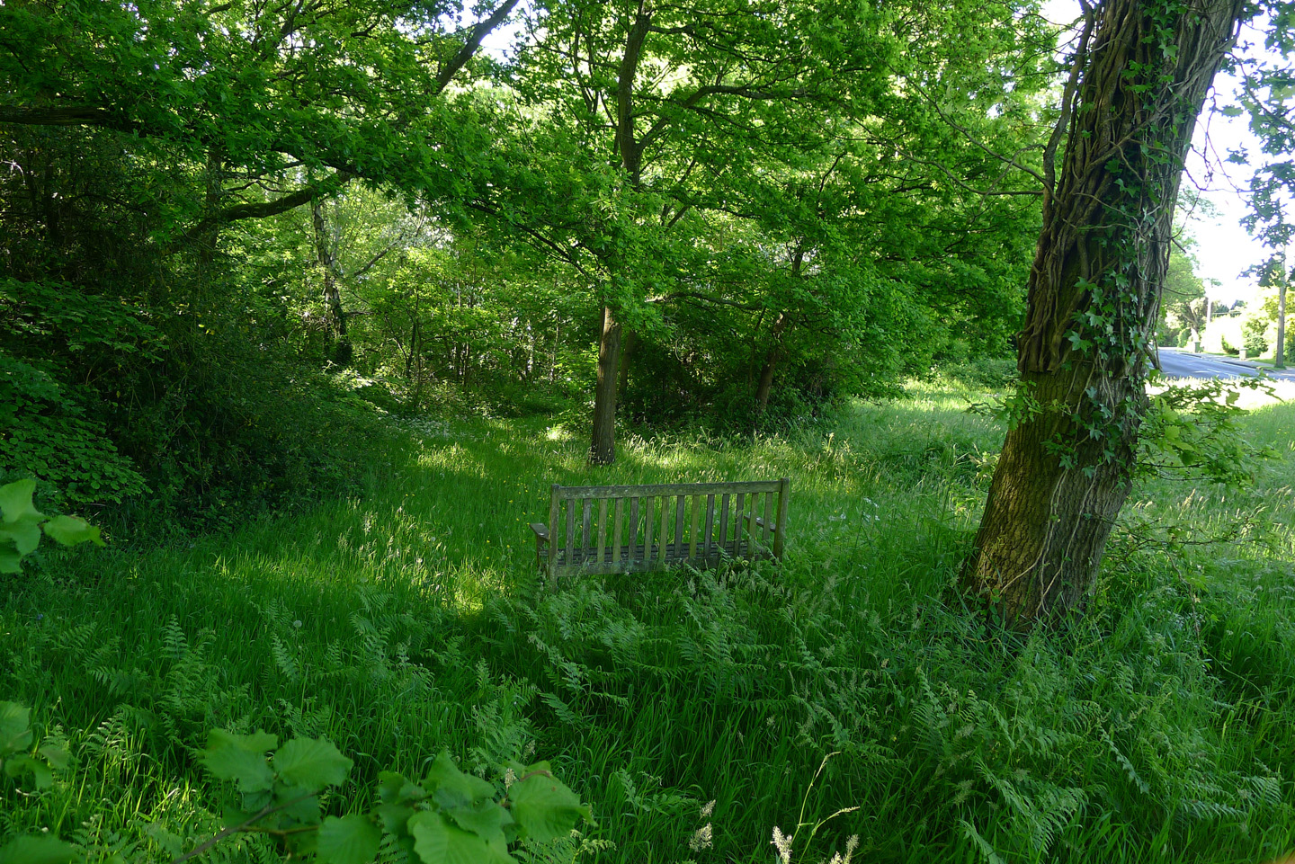 bench in a grassed area