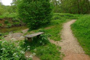 woodland bench alongside track