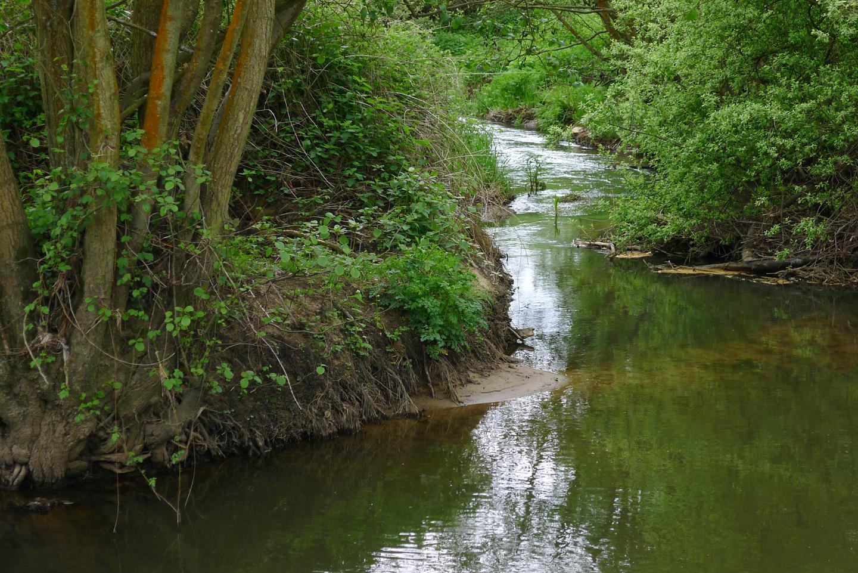 stream running through rotherlands nature reserve