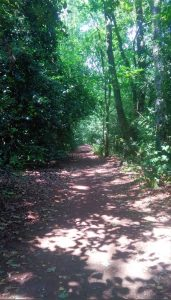 Petersfield Heath Path