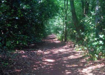 Petersfield Heath Path